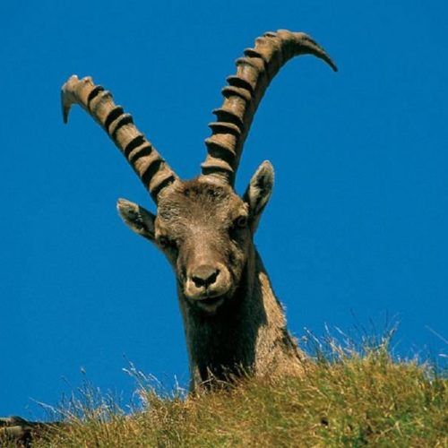 ibex-hiking-italy