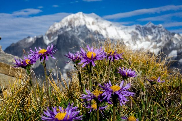 Trekking Alps Spring Hikes