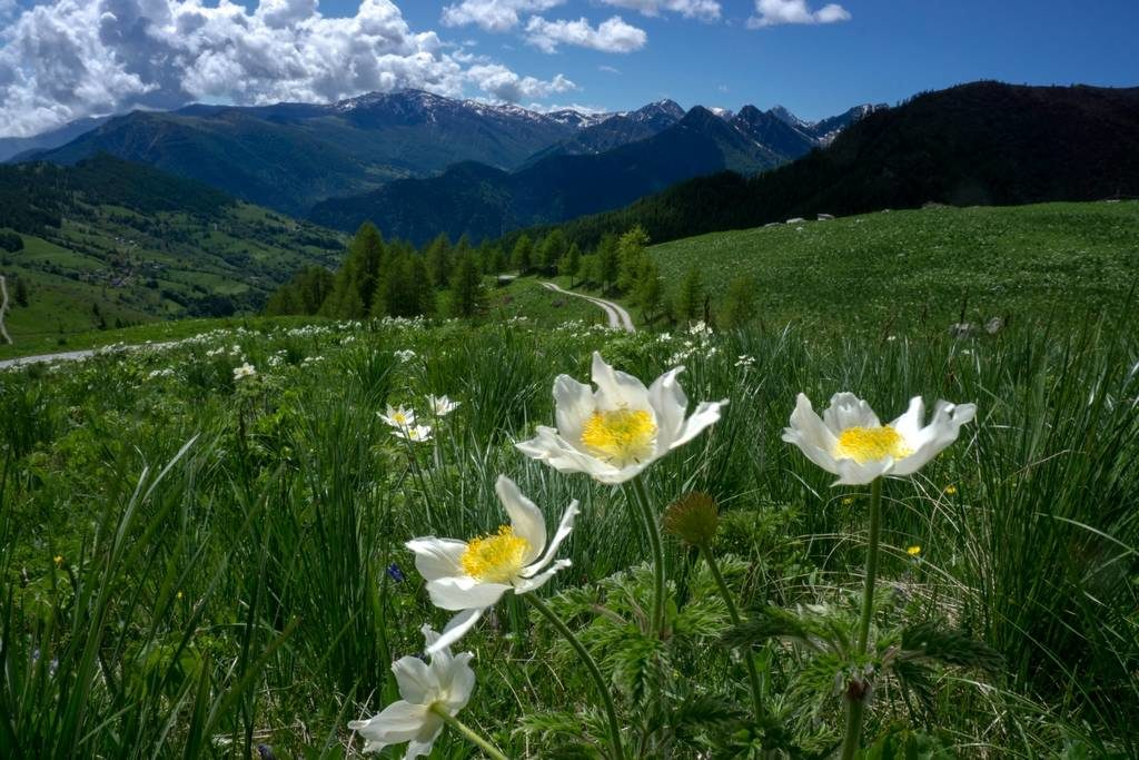Spring hike in Italy 1